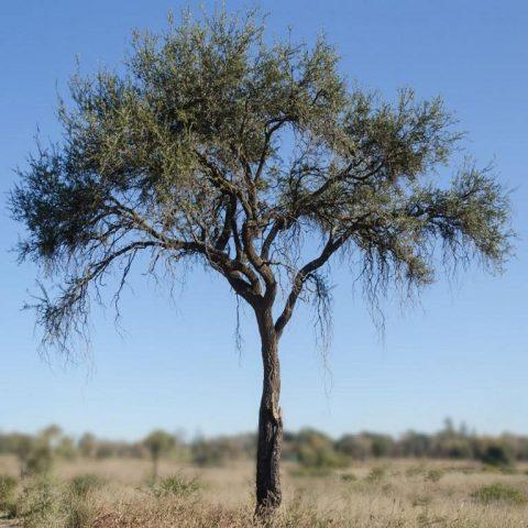 I tannini nella concia al vegetale: natura ed eccezionalità