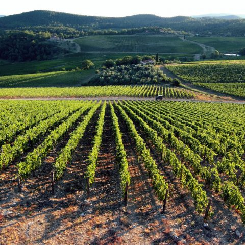 Quando il territorio fa la differenza: le Strade del Vino